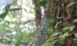 Tierwelt Costa Rica