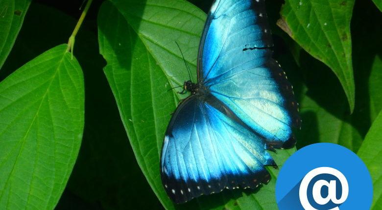 Schmetterling Arbeitskollege