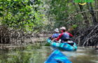 Kayak in Mangroven