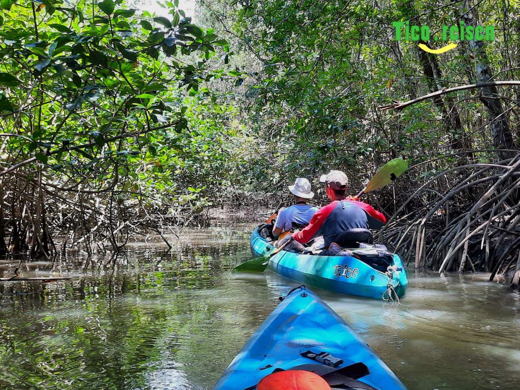Paddeln in den Mangroven